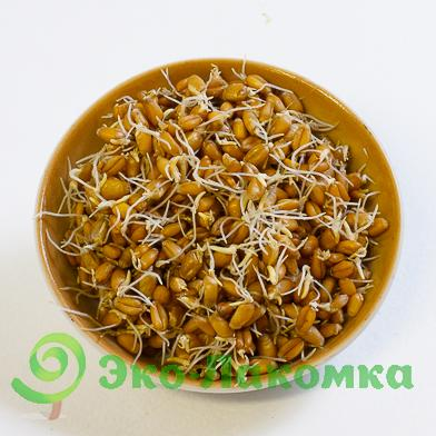 Проростки пшеницы, 200 г